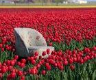 Fauteuil crapaud motifs fleuris VOGUE - BePureHome