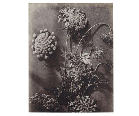 Tableau d'art botanique qualité supérieur - ARTY
