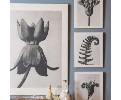 Tableau d'art botanique design - ARTO
