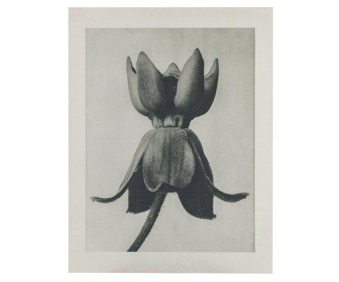 Tableau d'art botanique vintage - ARTA